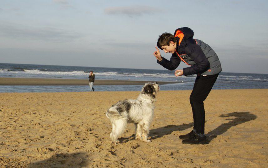 SOVA training met hond