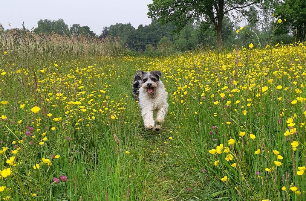 AAI en AAT honden vrije tijd